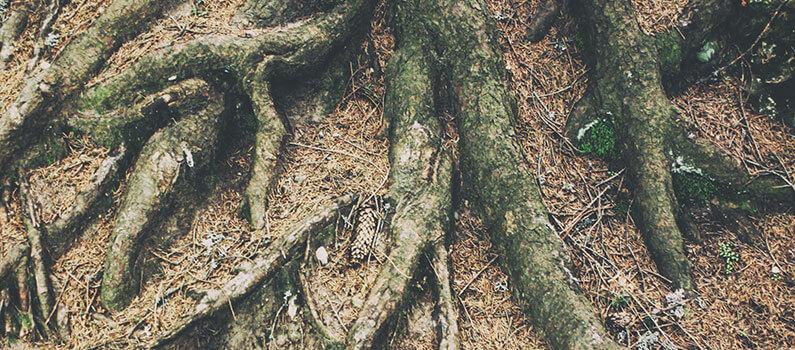 root care omaha ne